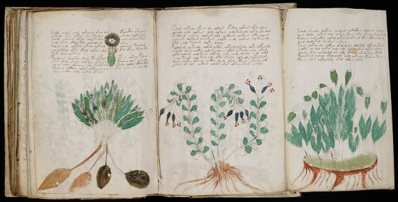 Voynich Manuscript Flora Green